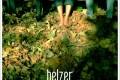 L'ultimo giorno d'inverno - Belzer