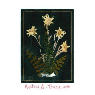 Tascam Love - AustraliA